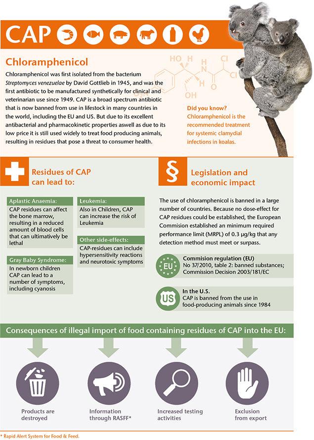 Infographic Chloramphenicol