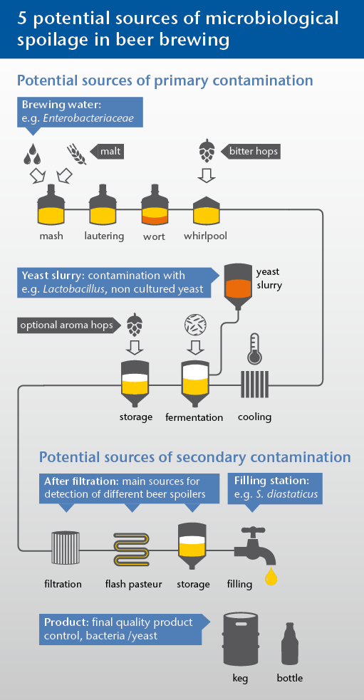 infographic_beer